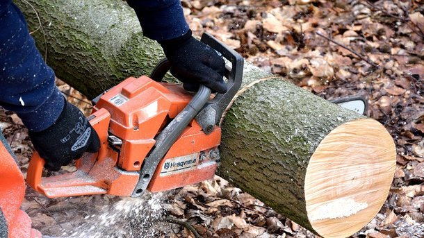 Мужчина занимался вырубкой леса. Фото: pixabay.com