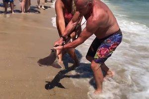 Отдыхающие голыми руками спасли акулу, выбросившуюся на пляж