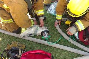 """Пожарные спасли собаку, """"откачав"""" ее кислородом"""