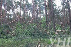 Ураган повредил более 200 гектаров леса на Волыни