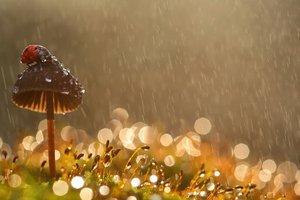 Прогноз погоды на август: жара и дожди