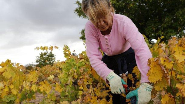 Чехия предлагает украинцам работу в агросекторе. Фото: AFP