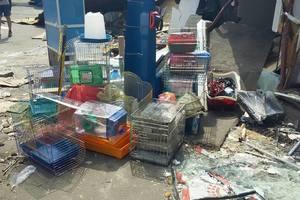 В Киеве во время сноса рынка погибли животные из зоомагазина