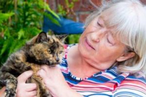Кошка-долгожительница обхитрила смерть, пережив опасную операцию в 31 год