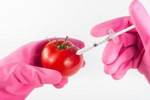 Как отличить ГМО от обычных продуктов: три простых способа