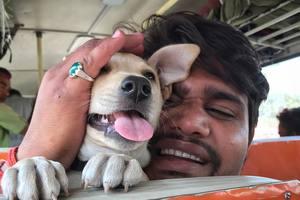 Забавный пес-путешественник прославился в соцсетях
