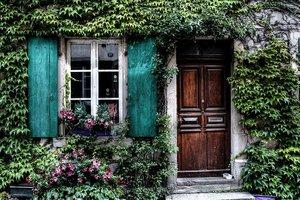 Три самых полезных комнатных растения
