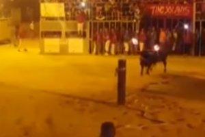 Бык, которому подожгли рога, совершил самоубийство на глазах у толпы