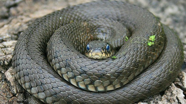 Змея напала на мужчину. Фото: youtube.com