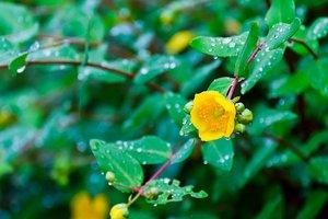 Погода на завтра: грозовые дожди принесут похолодание в Украину
