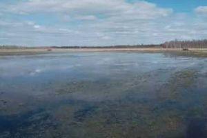 В Казахстане вслед за двумя внедорожниками в болоте застряли два грузовика и погрузчик