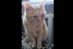 Видеохит: общительный кот Мурзик взорвал Интернет