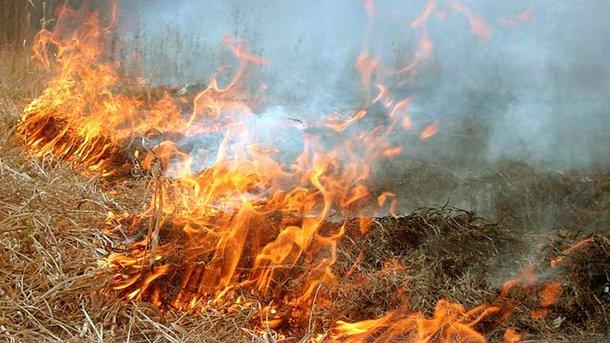 Из-за горящей травы погиб мужчина. Фото: upn.in.ua