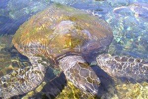 Туристы не смогли вернуться домой из-за забавной истории с черепахами