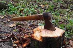 В Карпатах дерево раздавило лесоруба