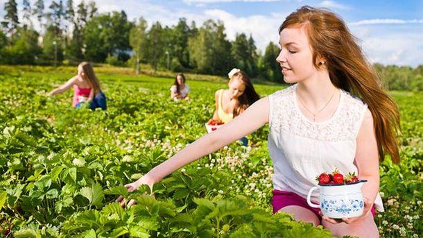 Около 40 сборщиков ягод из государства Украины  пропали вФинляндии