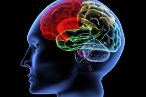 Ученые развеяли мифы по поводу работы мозга человека