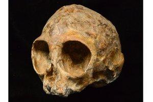 Археологи откопали череп ребенка, который жил 13 миллионов лет назад (видео)