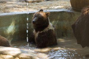 В Харькове животных от жары спасают зоомороженым и душем