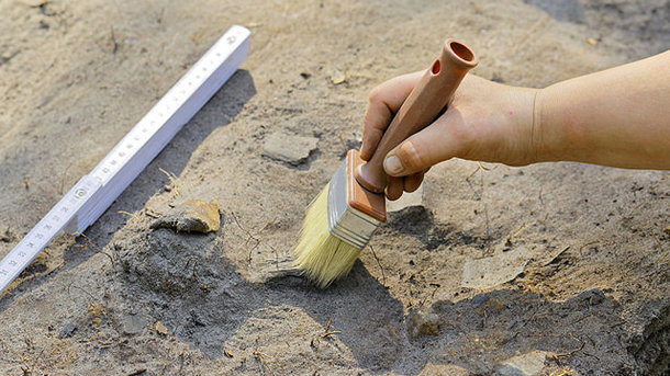 Ученые нашли растение, возрастом впочти 100 миллионов лет