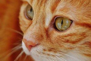Почувствуйте себя котом: как и в каких цветах видят мир животные