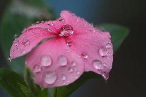 Стало известно, когда в Украину придут дожди и похолодание