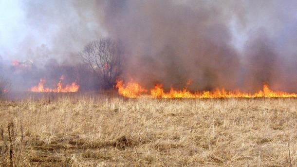 Мужчина погиб в поле. Фото: соцсети