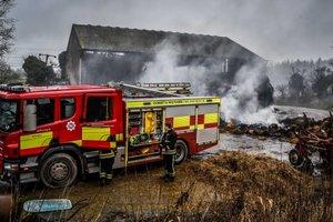Пожарные съели поросят, которых сами же спасли