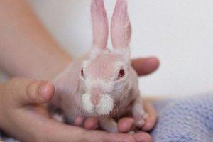 В Австралии спасенный от усыпления лысый кролик стал звездой соцсетей