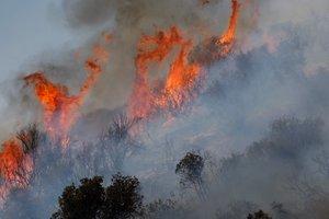 Порошенко отправил в Грузию самолет для тушения лесных пожаров