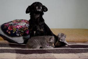 В Одессе собака стала мамой для двух котят