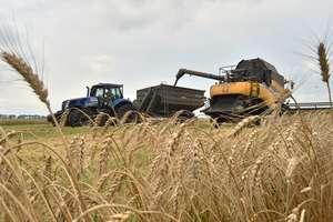 Новый урожай в Украине бьет рекорды