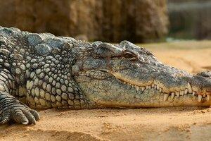 Рыбак отбился от крокодила голыми руками