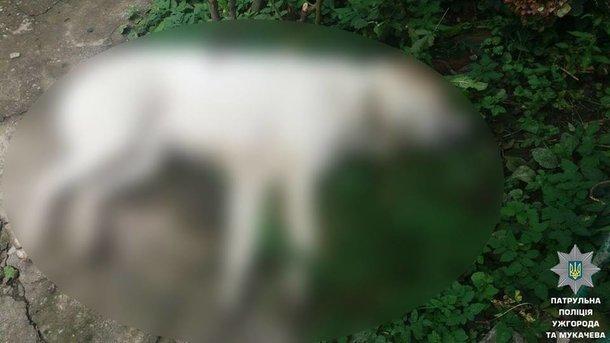 Собаку пришлось убить. Фото: патрульная полиция
