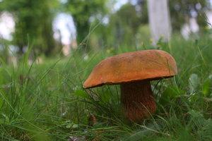 В Киеве за сутки шесть человек отравились грибами