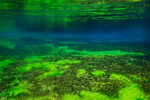 Ученые раскрыли секрет появления токсичных водорослей в озерах Америки