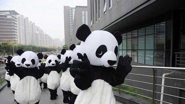 В США разыскивают грабителя в костюме панды