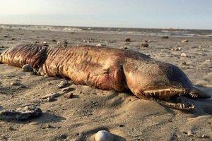 Жуткое существо, вынесенное на берег в Техасе: ученые определили, что это