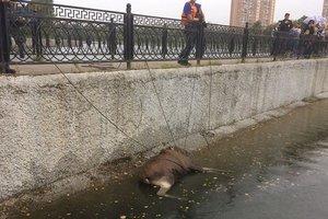 Видеошок: в Москве лось сбежал от полицейских и едва не утонул в пруду
