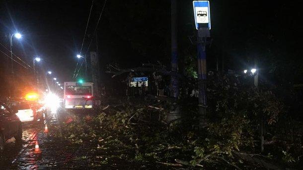 ВЧерновцах сильный ветер повалил десятки деревьев исорвал билборды
