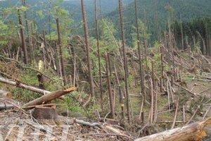 Ураган на Закарпатье повалил более 300 гектаров леса