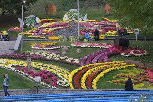 В Киеве на Певческом поле пройдет выставка хризантем