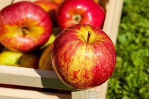 Как правильно хранить яблоки осенью и зимой: лучшие способы
