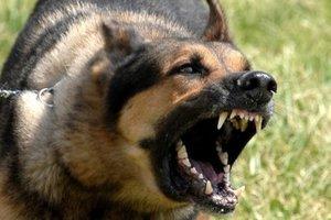 На наблюдателей ОБСЕ напали собаки в Херсонской области