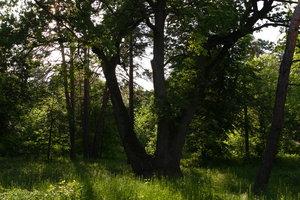 В Киеве активисты вбивают гвозди в деревья