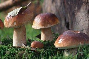 Во Львовской области двое грибников  попали в реанимацию