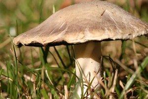 Правда или нет? На Прикарпатье за сутки грибами отравились девять человек