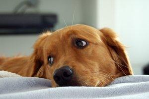 Видеохит: собака спасла щенков и стала звездой Интернет