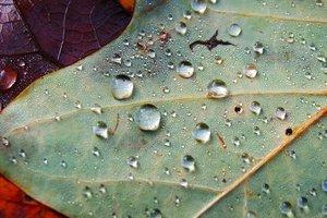 Прогноз погоды в Украине на неделю: где и когда пройдут дожди