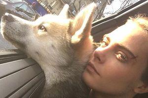 Кара Делевинь и ее пес страдают от одинаковой болезни